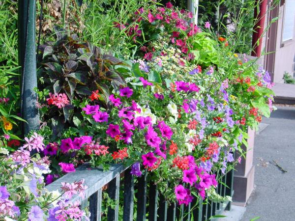 Eckbolsheim Fleurs