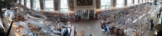 Galeries d'Anatomie comparée et de Paléontologie (Rolles)