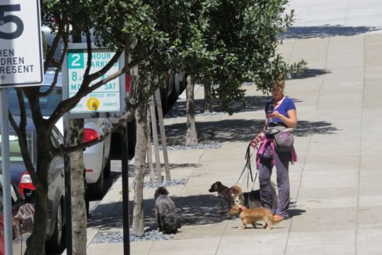 Job très courant à San Francisco : promeneuse de chiens